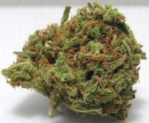 OG Kush – Hybrid | Buy Marijuana online | Buy Weed