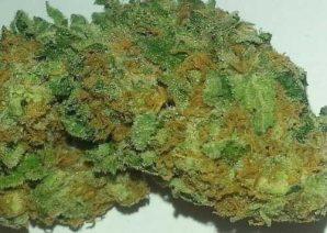 Pineapple Express – Hybrid | Marijuana Strains for sale