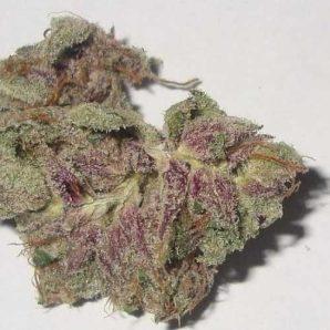 Purple Kush – Indica | Marijuana Strains for sale