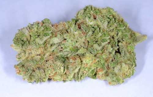 Origins, Benefits, and More about Purple Kush Cannabis Strain