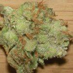 Super Lemon Haze Strain. Buy weed online.