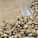 8 Medical Benefits of Marijuana Seeds